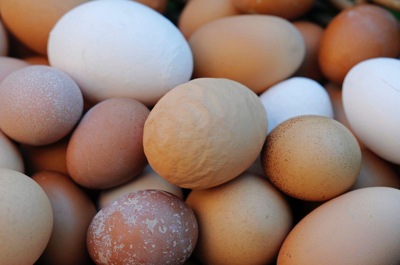 Egg ulike.jpg