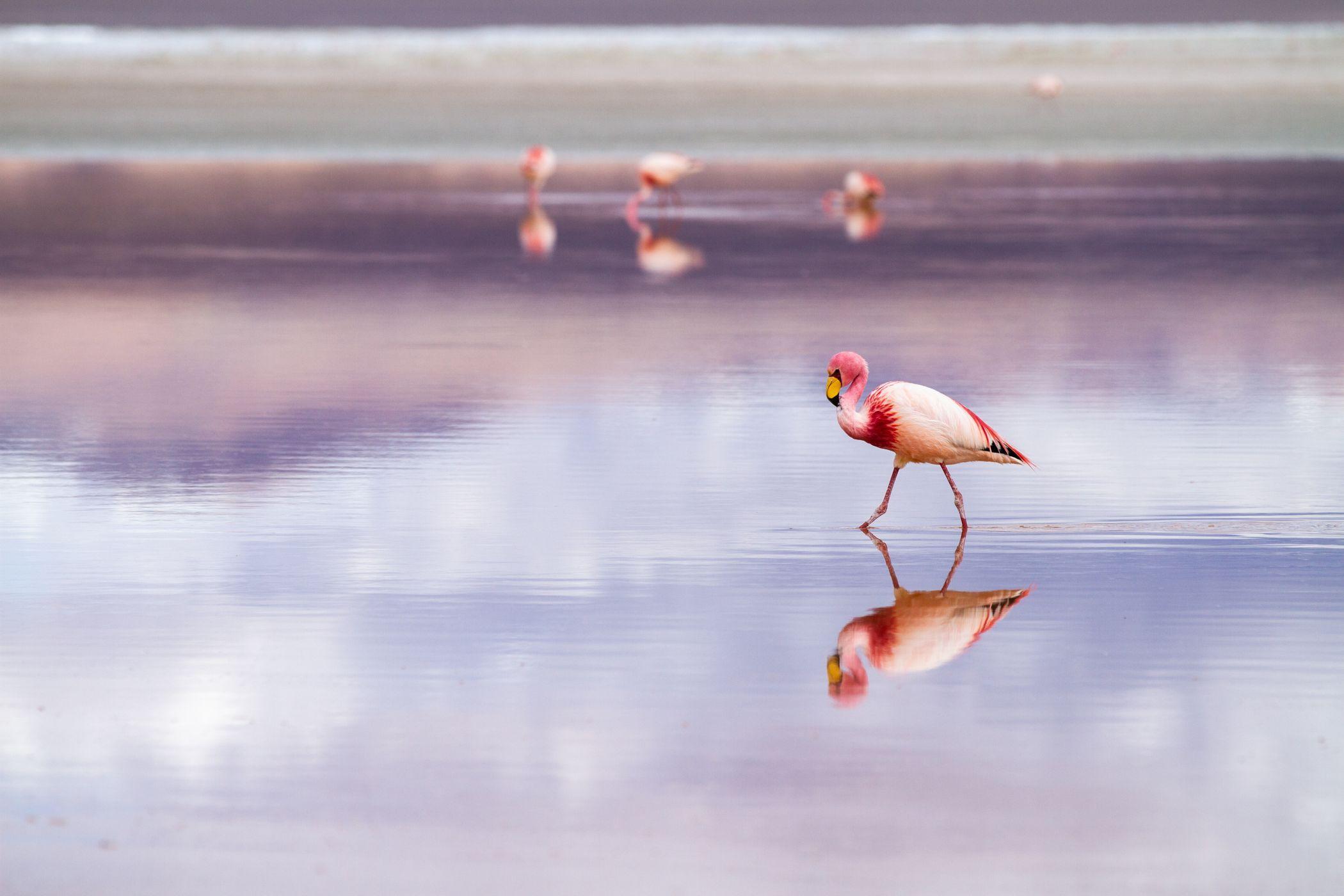 Natural landscape, Water, Bird, Sky, Beak, Lake, Flamingo