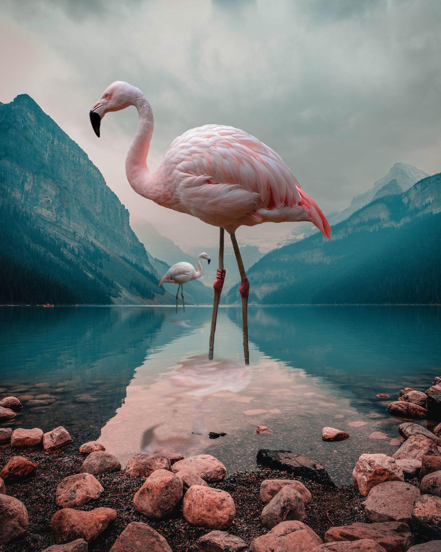 flamingo, mountain, landscape